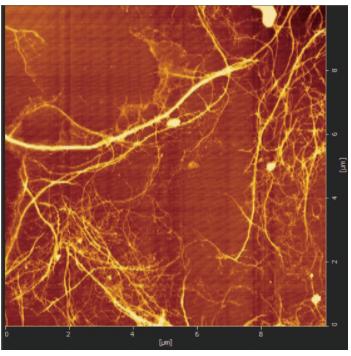 針葉樹の繊維拡大図(11.7nm)